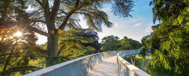 Stihl Treetop Walkway