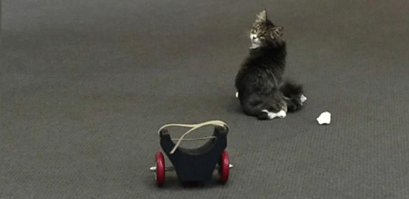 Школьники разработали и напечатали на 3D-принтере инвалидную коляску для больного кота